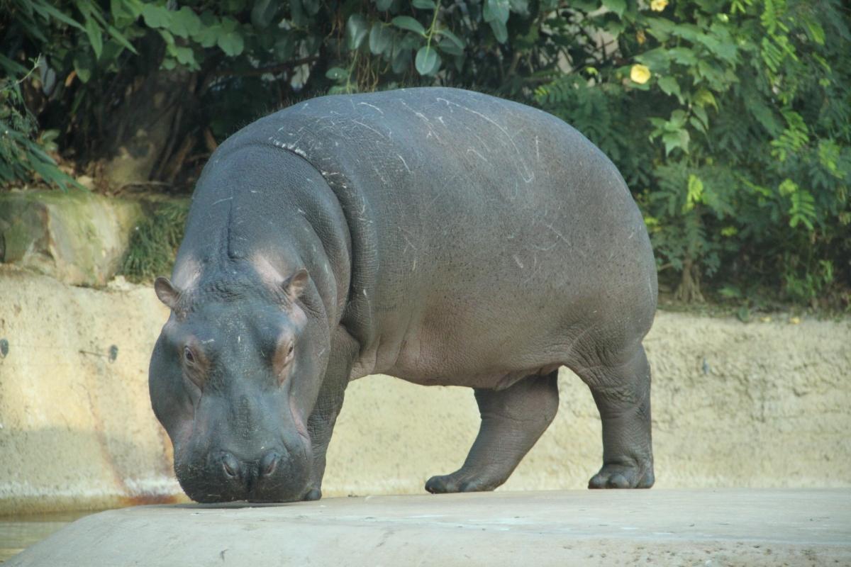 ТОП-10 лучших зоопарков Европы